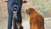 Dog N Roll Fully Automatic Retractable Dog Leash For Bicycles