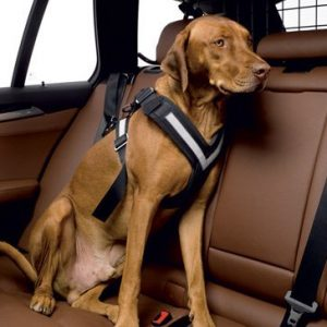 original-allsafe-dog-harness-02