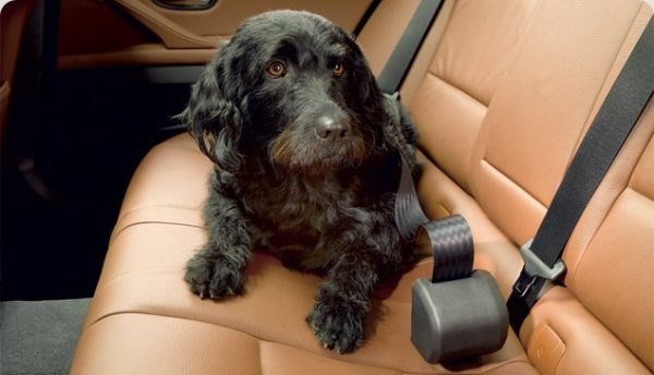 Click N Roll Automatic Retractable Dog Seat Belt System