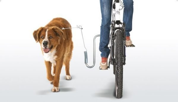 Dog Runner Bicycle Riding With Dog