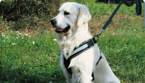 Original AllSafe Harness for Dogs.