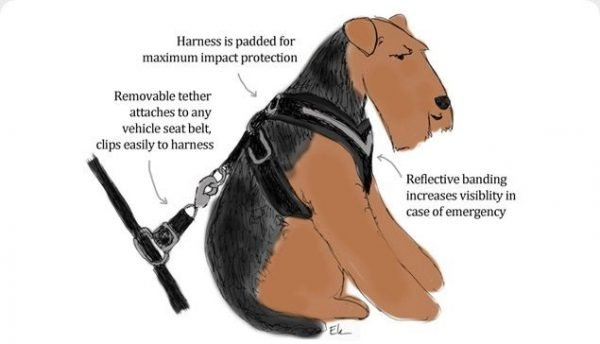 Original AllSafe Harness for Dogs Illustration.