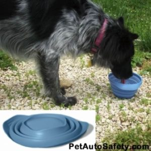 Dog Safety Tips for Outdoor Trip