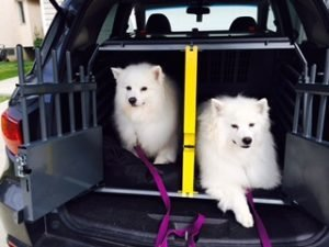 My Variocage Saved My Dogs' Lives